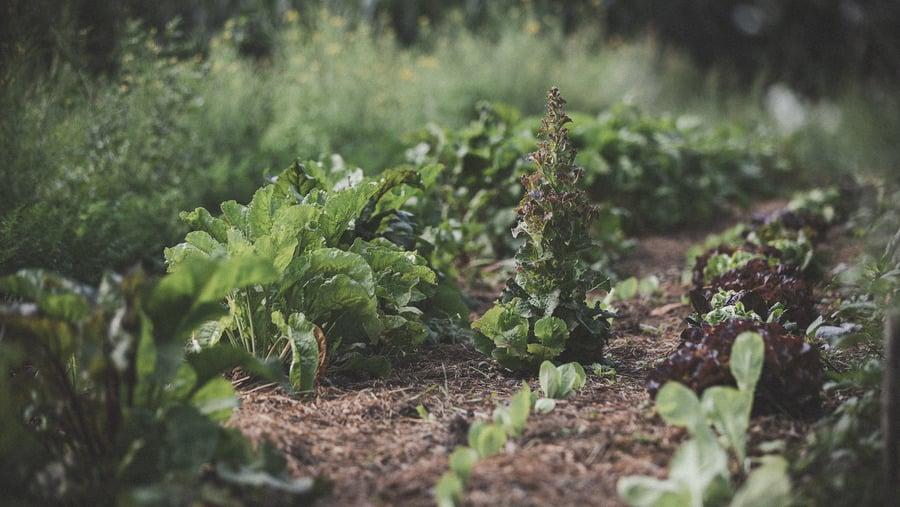 Tempo dopo il digiuno – mangiare consapevole e vivere più consapevole