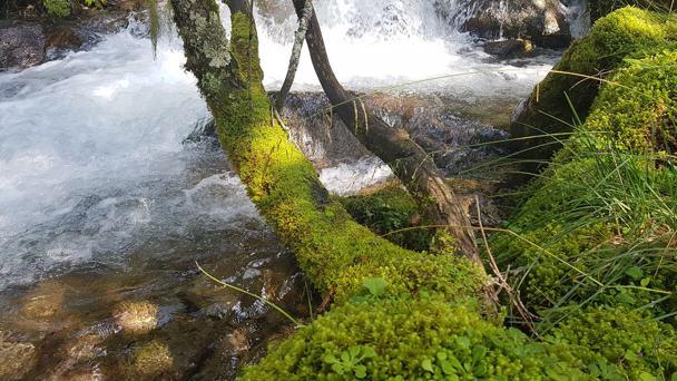 Respiriamo con la forza della natura